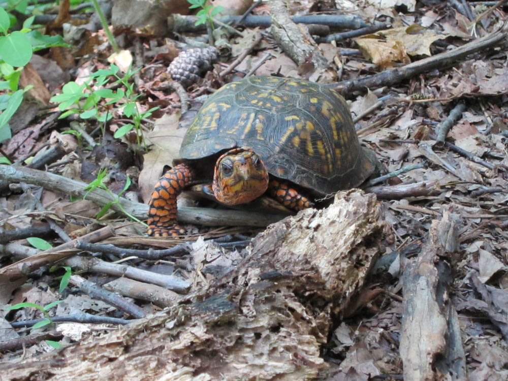 2010_05_29_10_Gorge_Caching-110