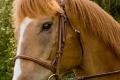 Ligonier Horse Show-101.jpg