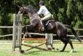 Ligonier Horse Show-114.jpg