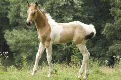Mt Zion Horses