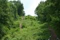 rachelcarson-20060624-160.jpg