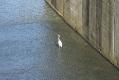 rachelcarson-20060624-200.jpg
