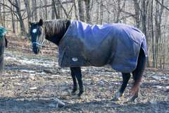 Gratuitious Horse Shots
