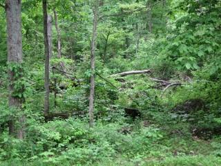 2011_05_23_Gettysburg_1-118