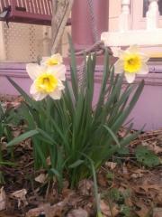 2012_03_15_Week_11