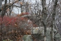 2005_11_05 Brush Mountain Geocaching _31_.jpg