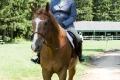 Ligonier Horse Show-107.jpg