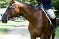 Ligonier Horse Show-108.jpg