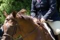 Ligonier Horse Show-112.jpg