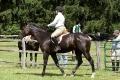 Ligonier Horse Show-113.jpg