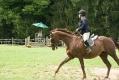 Ligonier Horse Show-115.jpg