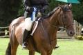 Ligonier Horse Show-119.jpg