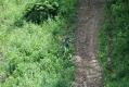 rachelcarson-20060624-166.jpg